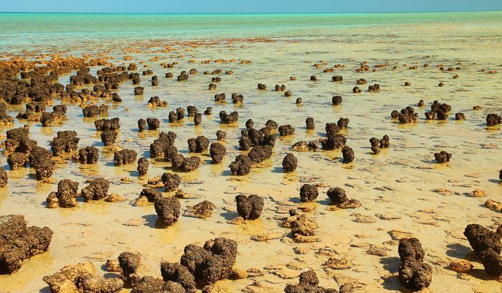 Строматолиты в заливе Шарк.