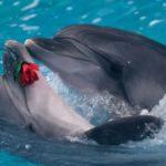 Сколько стоит дельфинарий в Москве?